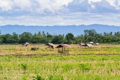 Vecchi cottage dell'agricoltore della Tailandia Fotografia Stock
