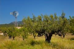 Vecchi di olivo e laminatoio di vento Fotografia Stock Libera da Diritti