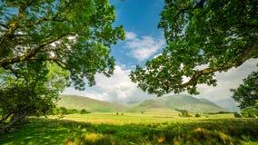 Vecchi e grandi alberi nel lago district, Inghilterra Immagini Stock Libere da Diritti