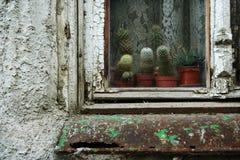 Vecchi finestra e cactus Fotografie Stock Libere da Diritti