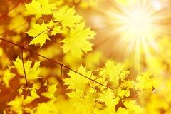 Vecchi foglio di autunno e raggio del sole Fotografia Stock Libera da Diritti
