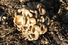 Vecchi funghi Immagini Stock Libere da Diritti
