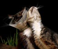 Vecchi gatti Immagine Stock