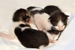 3 vecchi gattini di giorni Immagine Stock Libera da Diritti