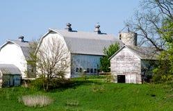 Vecchi granai bianchi nel Michigan Fotografie Stock Libere da Diritti