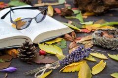 Vecchi libri fra le foglie di autunno nell'ambito di luce solare morbida Fotografia Stock Libera da Diritti