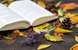Vecchi libri fra le foglie di autunno nell'ambito di luce solare morbida Immagine Stock