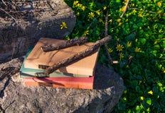 Vecchi libri in natura Fotografia Stock Libera da Diritti