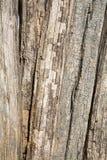 Vecchi mucchi di legno Immagini Stock