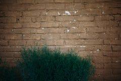 Vecchi mura di mattoni e cespugli nella parte anteriore immagini stock libere da diritti