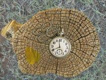 Vecchi orologio da tasca ed anelli di un ceppo di albero Immagine Stock Libera da Diritti
