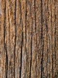Vecchi pali di legno. Immagine Stock