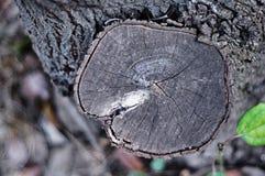 Vecchi pali di legno neri e grano di legno fotografia stock