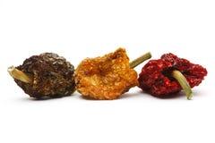 Vecchi peperoni dolci secchi Fotografia Stock Libera da Diritti