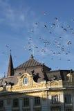 Vecchi piccioni bulding e volanti Immagine Stock