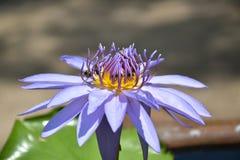 Vecchi pollini Fotografie Stock