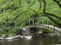 Vecchi ponti di legno lungo le rovine della foresta fotografie stock libere da diritti