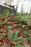 Vecchi punti di pietra, coperti di foglie di autunno Autunno in Wicklow, Irlanda Fotografia Stock