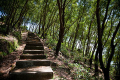 Vecchi punti in foresta Immagini Stock