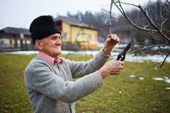 Vecchi rami di albero della guarnizione dell'agricoltore Immagini Stock Libere da Diritti