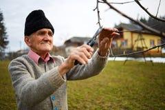 Vecchi rami di albero della guarnizione dell'agricoltore Fotografie Stock Libere da Diritti