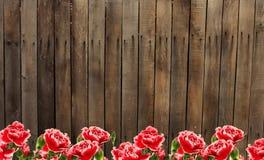 Vecchi recinto e fiori di legno Fotografie Stock