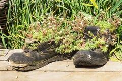 Vecchi stivali di camminata trasformati nei vasi Fotografia Stock Libera da Diritti