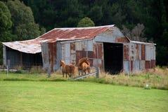 Vecchi tettoia & cavalli Immagini Stock Libere da Diritti