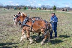 Vecchi trattori e un gruppo dei cavalli di lavoro nell'addestramento Fotografia Stock