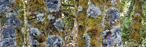 Vecchi tronchi dell'albero forestale Fotografia Stock