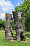 Vecchi tronchi di albero trunkated nel legno fotografia stock libera da diritti