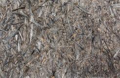 Vecchi trucioli di legno grigi Azione corrosiva degli elementi della superficie vecchia fotografie stock