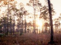 Vecchia alba di Florida immagine stock