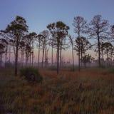 Vecchia alba di Florida fotografie stock libere da diritti