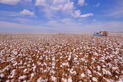 Vecchia annata tedesca campervan in un campo del cotone pronto per la raccolta nel campo Verde, Mato Grosso, Brasile fotografie stock
