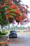 Vecchia automobile americana classica sulle vie di Avana Fotografia Stock Libera da Diritti