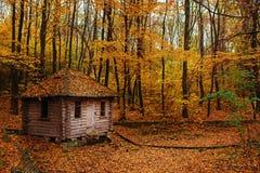 Vecchia baracca di legno telecomandata del guardia forestale nella foresta di autunno fotografia stock libera da diritti