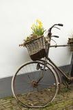 Vecchia bicicletta con un cestino del fiore Fotografie Stock Libere da Diritti