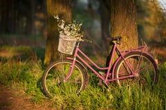 Vecchia bicicletta porpora con i fiori nel canestro anteriore in foresta Fotografie Stock