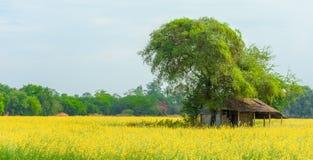 Vecchia capanna dell'agricoltore nel campo della canapa delle indie Immagini Stock Libere da Diritti
