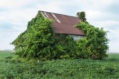 Vecchia casa con le viti Fotografie Stock Libere da Diritti