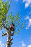 Vecchia casa di legno dell'uccello Fotografia Stock