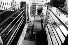 Vecchia casa di maiale Fotografie Stock Libere da Diritti