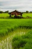Vecchia casa nel giacimento del riso Immagini Stock