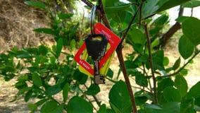 Vecchia chiave attaccata sui rami Fotografia Stock Libera da Diritti