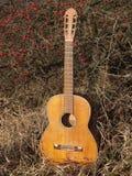 Vecchia chitarra in natura di autunno fotografia stock