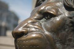 Vecchia città del leone bronzeo sul monumento fotografia stock libera da diritti