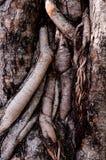 Vecchia corteccia Fotografie Stock