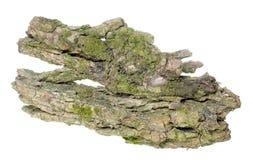 Vecchia corteccia della quercia Fotografie Stock