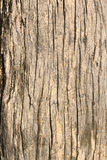 Vecchia corteccia di albero fotografia stock